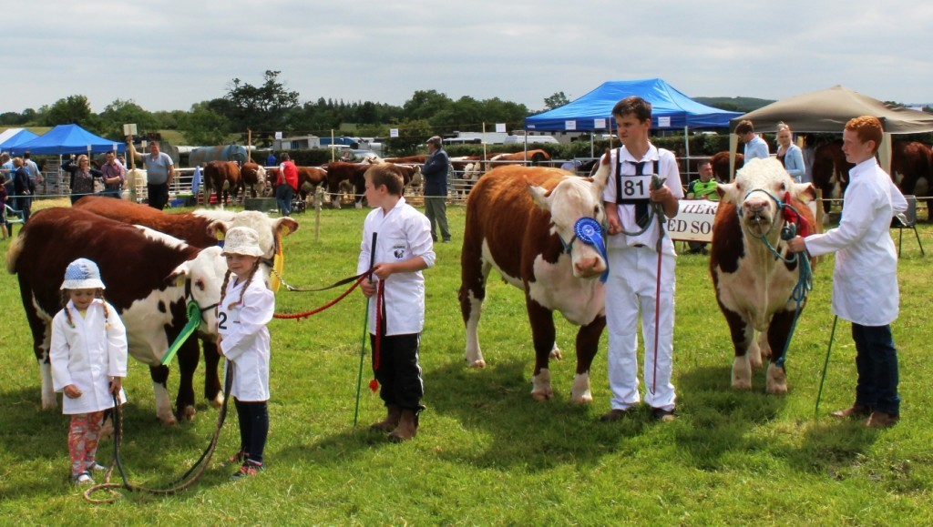 Young Stock Person Competition Sponsored by South Leinster Hereford Breeders